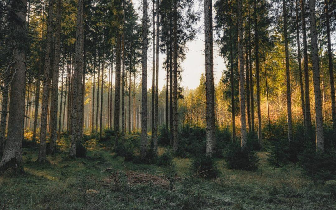 Henkistä ja taloudellista hyvinvointia metsästä